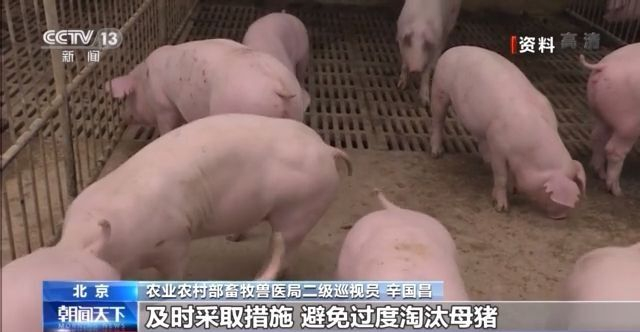 """肉价连降20周 多措并举应对""""猪周期""""下行压力"""