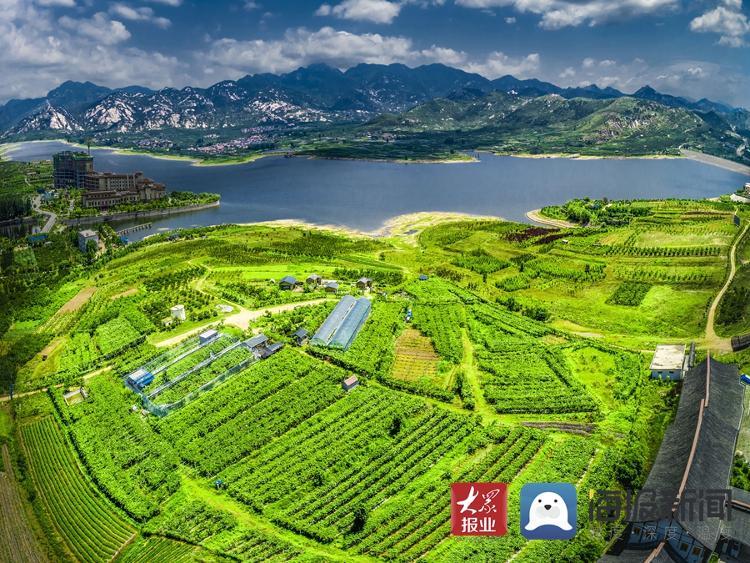 蒙山脚下新农人的梦想:让所有人吃上优质葡萄
